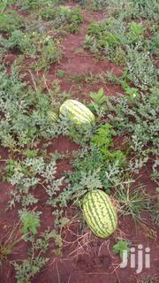Ready Watermelons For Sale   Feeds, Supplements & Seeds for sale in Uasin Gishu, Moiben