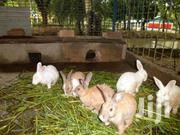 Rabbit Meat for Sale   Other Animals for sale in Nairobi, Kahawa West