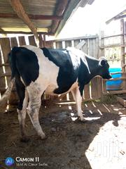 8 Incalf Friesian Heifers | Livestock & Poultry for sale in Nyandarua, Charagita