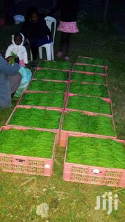 Fresh French Beans For Sale | Meals & Drinks for sale in Nairobi, Karen