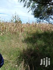 Land Moiben 1000 Acres Good for Farming and Ranch Quick Sale 1.1m Acre | Land & Plots For Sale for sale in Uasin Gishu, Langas