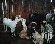 Sheep/Goats | Livestock & Poultry for sale in Uasin Gishu, Langas