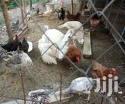 Improved Chicken Chicks | Livestock & Poultry for sale in Mombasa, Changamwe