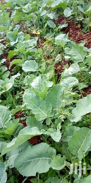Farm Fresh Sukuma Wiki Available For Bulk Purchases. Consistent Supply | Meals & Drinks for sale in Kiambu, Githobokoni