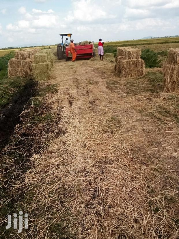 Archive: Rice Straws Hay Bales At Ksh 150 With Free Transportation