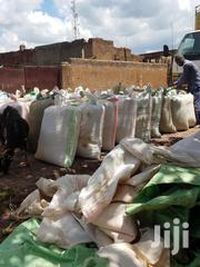 Wholesale Maize   Feeds, Supplements & Seeds for sale in Nakuru, Njoro