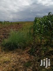 24 Acre in Narumoru | Land & Plots For Sale for sale in Nyeri, Naromoru Kiamathaga