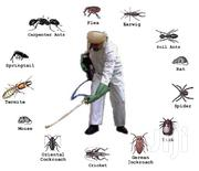 Sofa/Couch Cleaning And Pest Control Services | Cleaning Services for sale in Nairobi, Nairobi Central