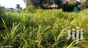 Prime Plot for Sale | Land & Plots For Sale for sale in Nyeri, Ruring'U
