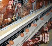 Electrogalvanised Chicken Cages | Farm Machinery & Equipment for sale in Mombasa, Bamburi