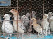 Newly Hatched Chicks | Livestock & Poultry for sale in Nairobi, Kasarani