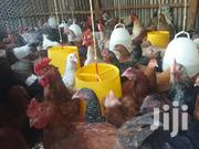 Chicken For Sale   Livestock & Poultry for sale in Kajiado, Ongata Rongai