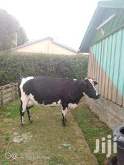 Fresian Heifer Cow | Livestock & Poultry for sale in Nyandarua, Rurii