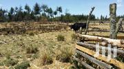 1/2 Acre Land For Sale In Kinangop | Land & Plots For Sale for sale in Nyandarua, North Kinangop