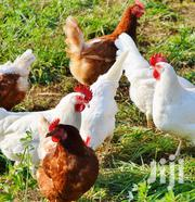 Domestic Poultry Could Be Your Cheaper Side Hustle | Livestock & Poultry for sale in Nakuru, Njoro