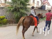 Horse And Camel Rides For Hire At Your Event | Party, Catering & Event Services for sale in Nairobi, Kitisuru