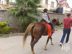 Horse And Camel Rides For Hire At Your Event