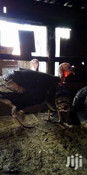 Mature Turkeys Available | Livestock & Poultry for sale in Nairobi, Kahawa West