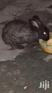 Rabbits For Sale | Livestock & Poultry for sale in Mombasa, Majengo