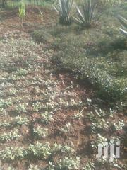 1/4 An On Sale At Bukembe | Land & Plots For Sale for sale in Bungoma, Bukembe East