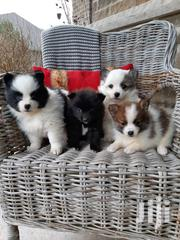 Young Male Mixed Breed | Dogs & Puppies for sale in Nairobi, Kayole Central