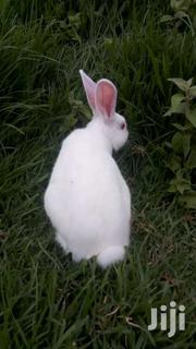 Rabbit | Livestock & Poultry for sale in Nyandarua, Rurii