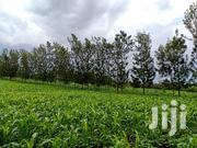 Land for Sale | Land & Plots For Sale for sale in Embu, Mwea