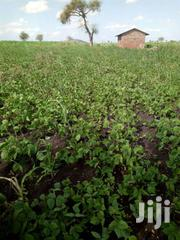 Cheap 6 Acres in Mwea-Mbeere South | Land & Plots For Sale for sale in Embu, Makima
