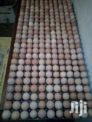 Fertilised/Incubation Eggs | Meals & Drinks for sale in Nakuru, Nakuru East