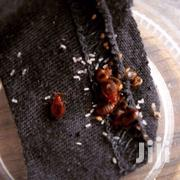 Bedbugs Control | Other Services for sale in Nairobi, Woodley/Kenyatta Golf Course
