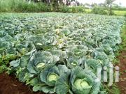 Cabbages For Sale | Feeds, Supplements & Seeds for sale in Kiambu, Githiga (Githunguri)
