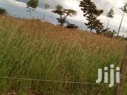Boma Rhodes Grass Seeds | Feeds, Supplements & Seeds for sale in Machakos, Athi River