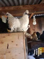 Frizzle Pekin | Other Animals for sale in Kiambu, Ndenderu