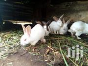 Rabbits for Sale | Other Animals for sale in Mombasa, Changamwe