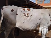 Heifers Breeds | Livestock & Poultry for sale in Kiambu, Githunguri