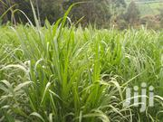 Distress Sale - Prime 2 Acres of Agricultural Land   Land & Plots For Sale for sale in Meru, Mitunguu
