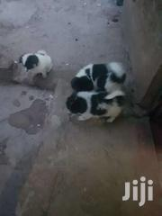 4 Mixed Breed Puppies For Sale. 3 Months Old | Dogs & Puppies for sale in Kajiado, Ongata Rongai
