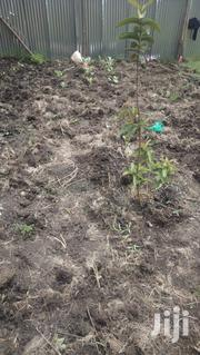 1/8 Prime Plot for Sale | Land & Plots For Sale for sale in Kajiado, Ongata Rongai