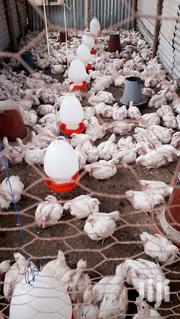 Mature Broiler Chicken | Livestock & Poultry for sale in Machakos, Kinanie