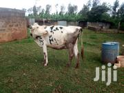 Holstein Friesian | Livestock & Poultry for sale in Kiambu, Ruiru