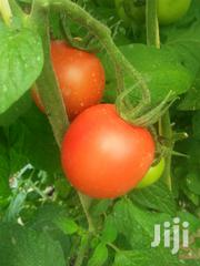 Tomatoes For Sale | Feeds, Supplements & Seeds for sale in Nairobi, Nairobi Central