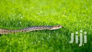 Get Rid Of Snakes | Other Services for sale in Nairobi, Kileleshwa