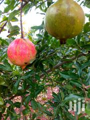 Giant Pomegranate Fruit Seedlings | Feeds, Supplements & Seeds for sale in Nyeri, Karatina Town