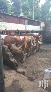 Ayshire Dairy Cow For Sale In Kiambu | Livestock & Poultry for sale in Kiambu, Riabai