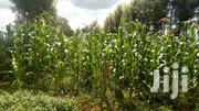Plot for Sale | Land & Plots For Sale for sale in Kisii, Bogiakumu