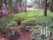 Bamboo Seedlings | Feeds, Supplements & Seeds for sale in Nairobi, Baba Dogo