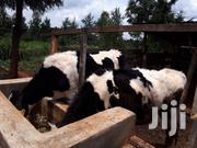 Fully Functional Farm With Cows | Commercial Property For Sale for sale in Kiambu, Kikuyu