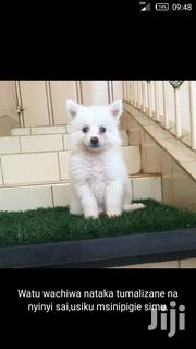 Baby Female Purebred Chihuahua | Dogs & Puppies for sale in Nairobi, Nairobi Central
