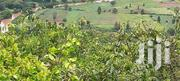 15 Acres Kanyagia Mweiga, Nyeri | Land & Plots For Sale for sale in Nyeri, Mweiga
