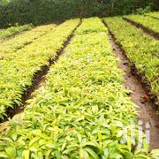 Smart Farming | Garden for sale in Embu, Mbeti North